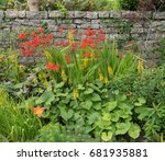 Herbaceous Border  Ligularia ...