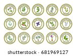 set of essential oil labels.... | Shutterstock .eps vector #681969127