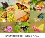 collage of bright  colorful... | Shutterstock . vector #68197717