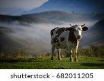 cow on farmland in romania in... | Shutterstock . vector #682011205