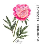 watercolor hand painted peony... | Shutterstock . vector #682051417