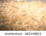 wheat field. ears of golden... | Shutterstock . vector #682148821