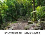 footpath in the jungle on the...   Shutterstock . vector #682192255