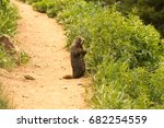 Small photo of Marmot in Rocky Mountain, Colorado near Arapaho pass