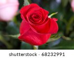 Photo Of Bright Red Roses