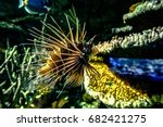 lionfish with colorful reef...   Shutterstock . vector #682421275