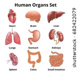 realistic human organs set... | Shutterstock .eps vector #682422079
