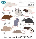 rat breeds icon set flat style... | Shutterstock .eps vector #682426615