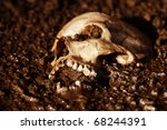Real Human Skull Figured As...