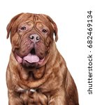 Drawing Dog Portrait On A Whit...