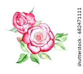two pink roses. watercolor... | Shutterstock . vector #682471111