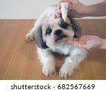 veterinarian hands applying... | Shutterstock . vector #682567669