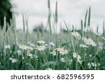 beautiful daisy flowers in... | Shutterstock . vector #682596595