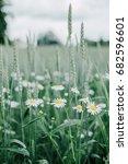 beautiful daisy flowers in... | Shutterstock . vector #682596601
