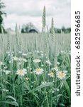 beautiful daisy flowers in... | Shutterstock . vector #682596685