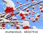 clusters of a red rowan against ... | Shutterstock . vector #68267416