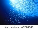 Shoal Of Mackerel Fish In Blue...