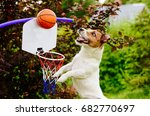 Stock photo funny basketball player catching ball above hoop 682770697