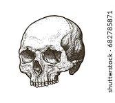 anatomic skull art with shadow. ... | Shutterstock .eps vector #682785871