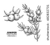 juniper vector drawing.... | Shutterstock .eps vector #682832731