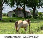 horse walking away along a...   Shutterstock . vector #682896169