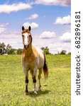 horse standing and facing...   Shutterstock . vector #682896181