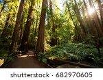 muir woods national monument...   Shutterstock . vector #682970605