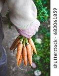 organic vegetables. healthy... | Shutterstock . vector #683061859