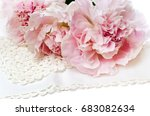 beautiful pink peony on a white ... | Shutterstock . vector #683082634