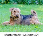 airedale terrier is a strong...   Shutterstock . vector #683085064