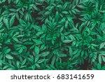 vintage tone of green leaf... | Shutterstock . vector #683141659