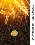 Small photo of One euro coin in soil and harvested wheat ears for agriculture and agribusiness concept