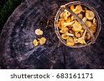 mushrooms chanterelle in the... | Shutterstock . vector #683161171
