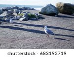 seagull walking on the sand at  ... | Shutterstock . vector #683192719