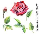 wildflower rose flower in a... | Shutterstock . vector #683227057