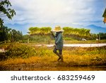 Small photo of Farmer carry the saplings rice move to padding fields. beatiful countryside view. the most agriculture economy of asian.Household agriculture and displacement by machine ceoncept.