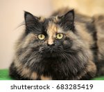 Beautiful Fluffy Cat...