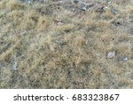 dry grass on texture and... | Shutterstock . vector #683323867