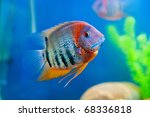 Colorful Fish In Aquarium...