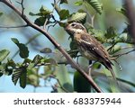 side view of a juvenile brown  ... | Shutterstock . vector #683375944