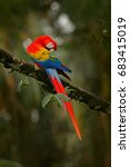 red parrot scarlet macaw  ara... | Shutterstock . vector #683415019