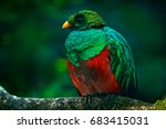 golden headed quetzal ... | Shutterstock . vector #683415031