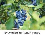 fresh organic blueberrys on the ... | Shutterstock . vector #683444599