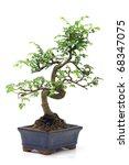 chinese green bonsai tree... | Shutterstock . vector #68347075