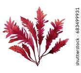 Red Seaweed Kelp  Algae In The...