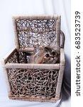 Stock photo cute kitten in the basket 683523739