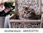 Stock photo cute kitten 683523751