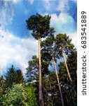 Small photo of Wonderful pine trees. Beautiful landscape. Amazing National Parks. Tall trees stretch to the sky. Stunning vintage image. Looking up. Walking in the forest. Old photo on tattered paper background.