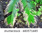 focused two green leaves  | Shutterstock . vector #683571685