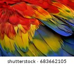 Colorful Bird Feathers Of...